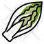 Chicory