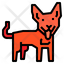 Dingo Dog