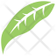 Elaeagnus Angustifolia Leaf