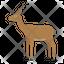 Gazelle Dorkas