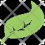 Hackberry Leaf