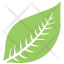 Hevea Brasiliensis Leaf
