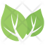 Milkweed Leaves