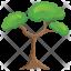 Pitch Pine Tree